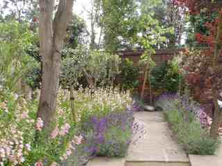 Planting Design Dry Sunny areas