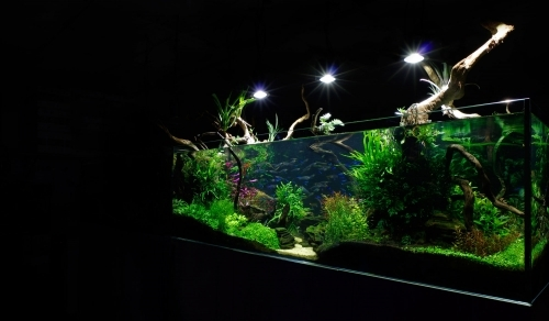 Planted Aquarium Aquatic Design Centre Installation