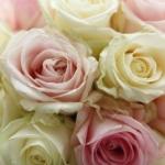 Hearts Interiors & Flowers