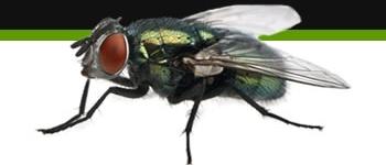 Bg Middleright Fly