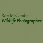 Ron McCombe Wildlife Photography