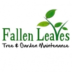 Fallen Leaves Tree and Garden Maintenance