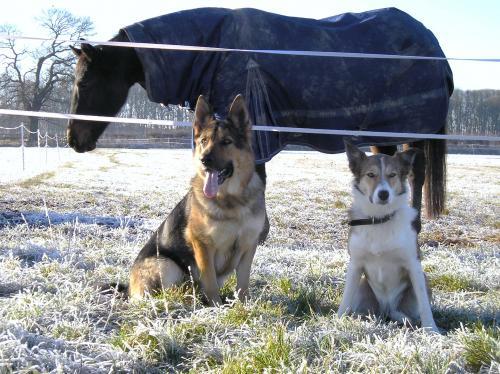 Dog Training Wombourne West Midlands