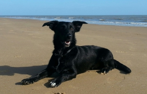Archie at Walton-on-the-Naze