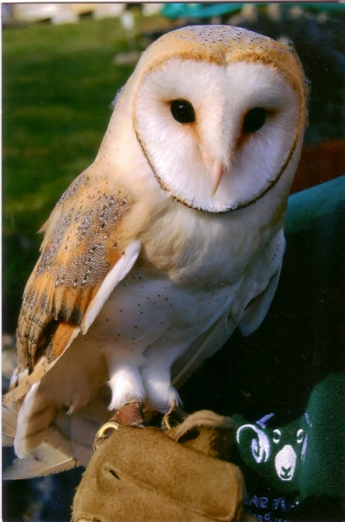 Owls and animals