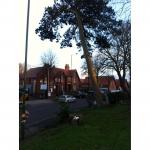 South Midland Tree Services Ltd