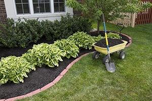 Garden Maintenance Notting Hill