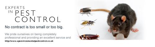 BED BUGS -RATS-COCKROACH - BED BUGS