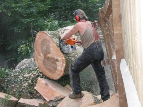 Cutting a trunk into sections
