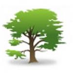 B & N Treecare Arborist Ltd