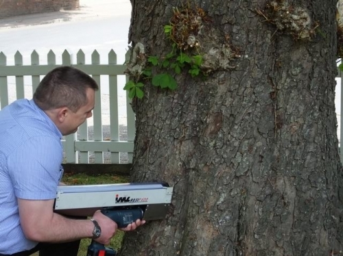 Tree Decay Detection testing with a Resistograph