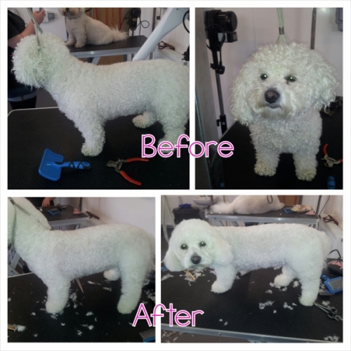 Looking good after grooming at Chaiquinta Grooming salon, Doncaster 01302844867