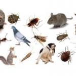 Flashback Pest Control