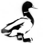 The Mucky Duck